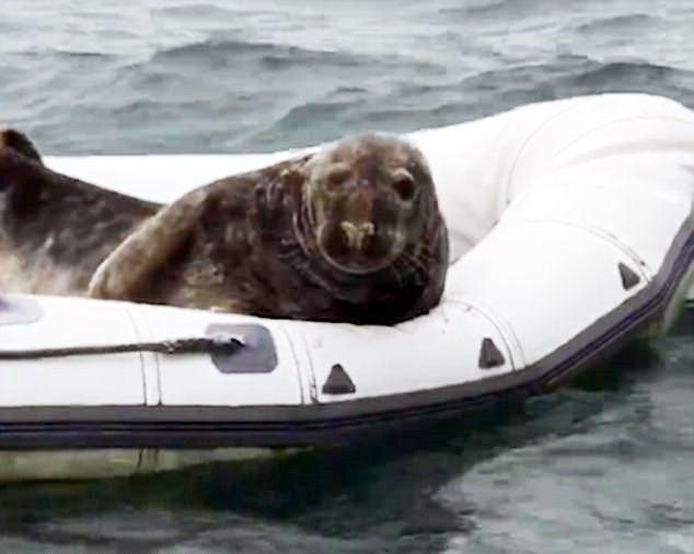 Irlandia Północna – poznaj fokę, która nie znosi pływać