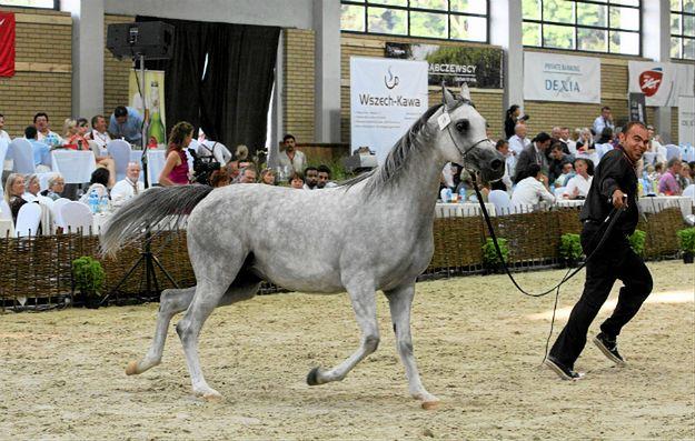 Aukcja koni w Janowie Podlaskim w 2011 roku