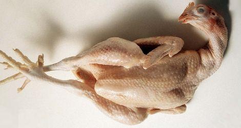 Niektórzy są przekonani, że kurczak chroni przed ciążą