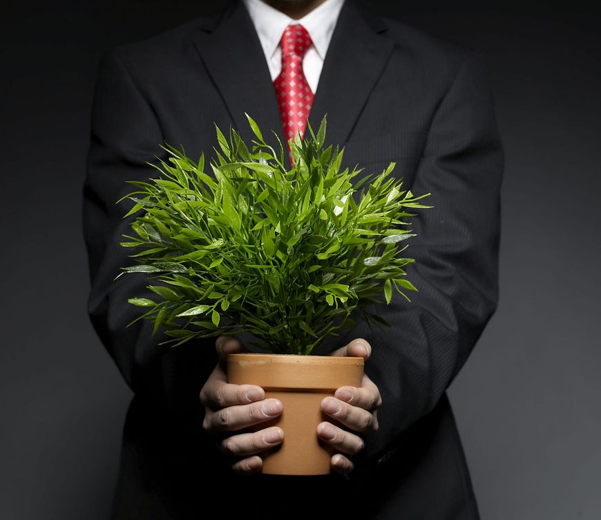 Rośliny lecznicze, które powinieneś mieć w domu