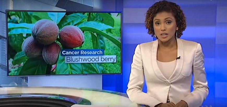 Nowy naturalny lek na raka odkryty w Australii