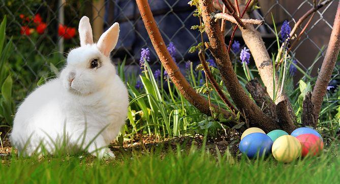 Święta Wielkanocne kojarzą się z pisankami i zajączkami
