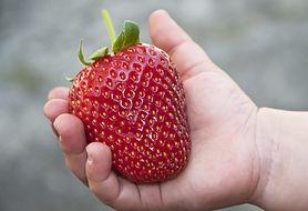 Jakie produkty uczulają małe dzieci, czyli dieta dla malucha z alergią pokarmową