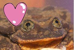 Żaba ogłasza się na portalu randkowym. Ekologiczne lovestory