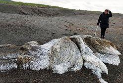 Włochaty stwór na brzegu morza. Nie ma głowy i oczu