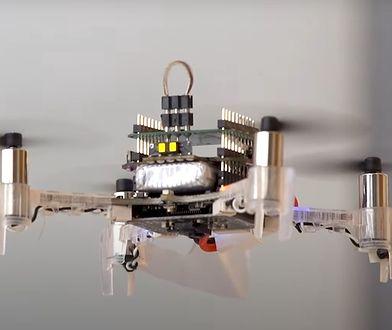Biohybryda drona z ćmą. Nabytek armii USA