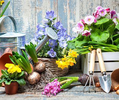 Kilka narzędzi wystarczy, żeby rozpocząć przygodę z ogrodnictwem
