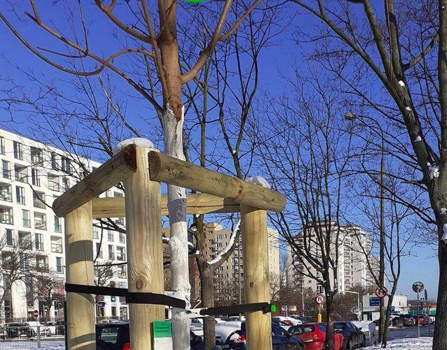 Warszawa. Drzewa jak na dłoni. Powstała mapa, która pokazuje wszystkie okazy dendrologiczne wyższe niż 3 metry