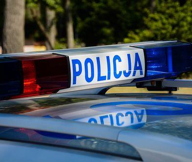 Śmiertelny wypadek na A1 w Sójkach. Zderzenie auta z łosiem