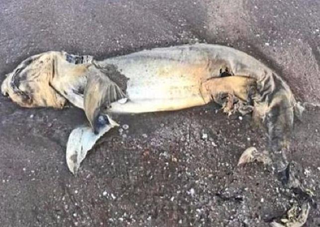 Morze wyrzuciło szczątki. Tajemnicze stworzenie poruszyło Australijczyków