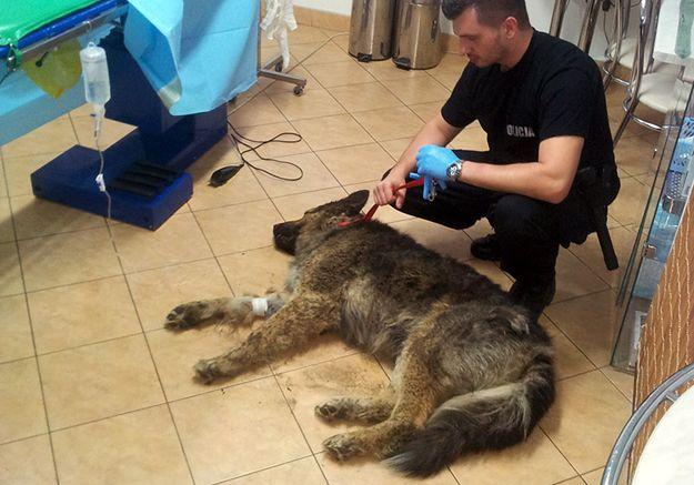 Żywcem zakopał psa. Zwierzę uratowali policjanci
