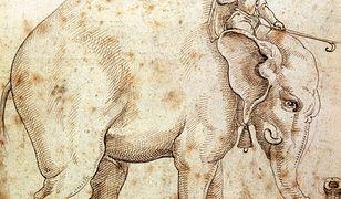 """""""Podróż słonia"""" - niepublikowana dotychczas powieść noblisty José Saramago już w księgarniach"""