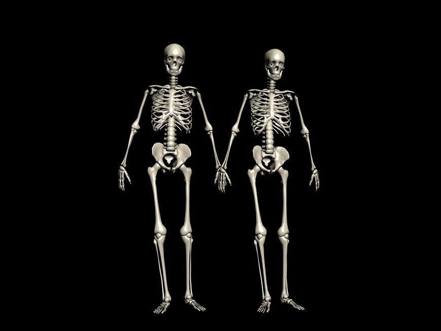 Szkielet kobiety, a mężczyzny