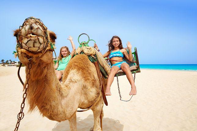 Przejażdżka na wielbłądzie po plaży bądź pustyni to dla dziecka nie lada gratka