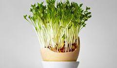 W marcu siejemy rzeżuchę. Sprawdź, dlaczego warto ją jeść