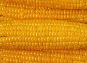 W tym roku zbiory kukurydzy mogą wynieść 3 mln ton