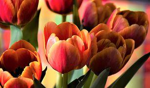Życzenia i wierszyki na Dzień Matki 2020