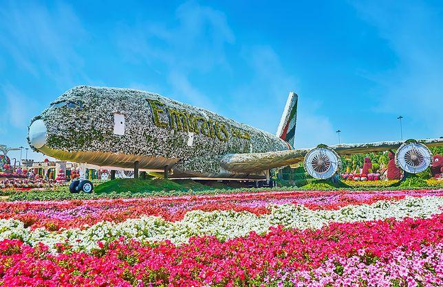 Kwiatowy samolot w Dubai Miracle Garden