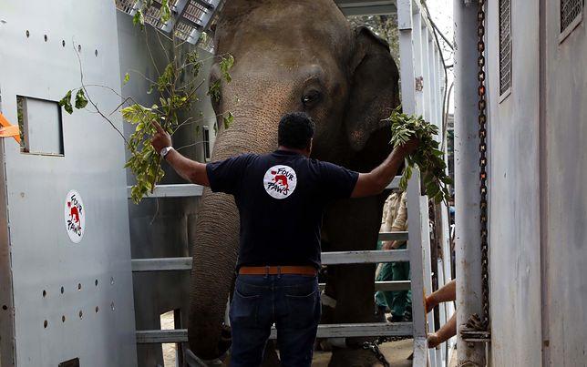 Kaavan pojechał z Pakistanu do kambodży