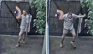 Australia: roztańczony pracownik zoo w Melbourne. Myślał, że nikt go nie widzi