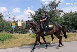 Dąbrowa Górnicza. Patrole konne dbają o bezpieczeństwo nad Pogorią 4