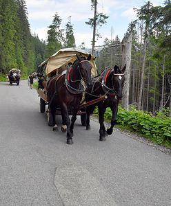 Kulawy koń ciągnął turystów nad Morskie Oko. Wstrząsające nagranie trafiło do sieci
