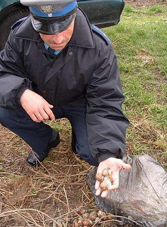Policjanci uwolnili 45 kilogramów winniczków
