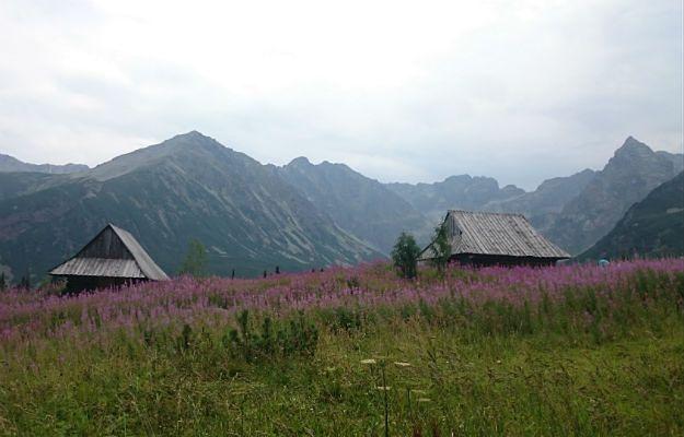 Zostań wolontariuszem na górskich szlakach. Dołącz do drużyny TPN