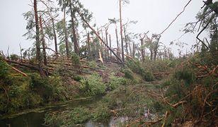 Aż 38 tys. ha lasów zostało zniszczonych na skutek nawałnic