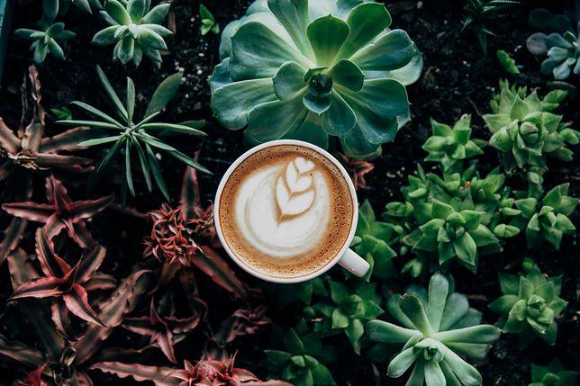 Jeśli lubisz smak kawy, a nie służy ci ona - wybieraj bezkofeinową.