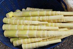 Pędy bambusa - jak je wykorzystać w kuchni?