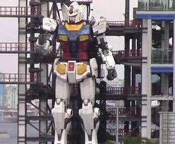 Gigantyczny robot. Ma blisko 20 metrów, waży aż 24 tony! [WIDEO]
