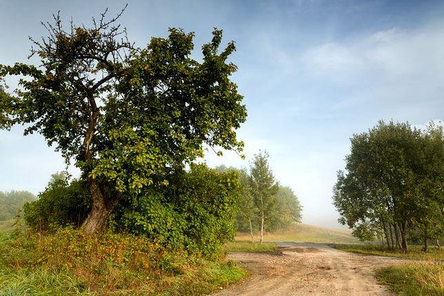 Droga Kaszubska - atrakcja dla amatorów czterech kółek