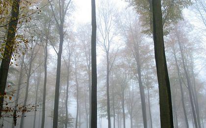Duże zagrożenie pożarowe w lasach m.in. Pomorza i Wielkopolski