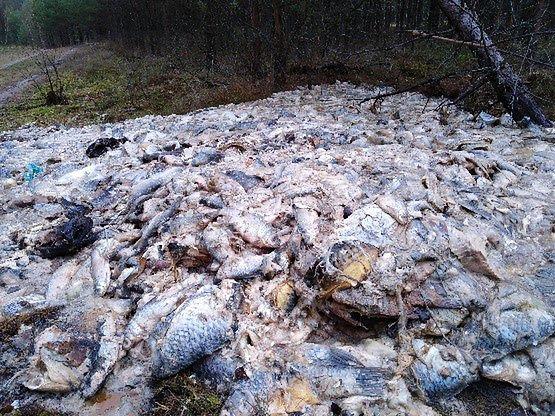 """Taki """"prezent"""" znaleźli leśnicy z nadleśnictwa Przymuszewo."""
