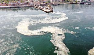 """Turcja. """"Morskie smarki"""" w Morzu Marmara coraz większym problemem"""