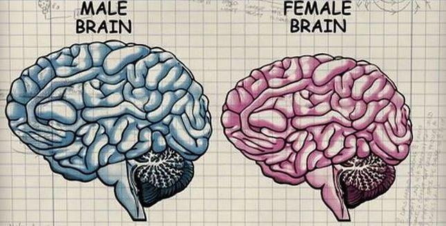 Czym różnią się mózgi kobiet i mężczyzn?