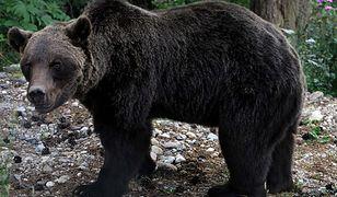 Budzą się niedźwiedzie