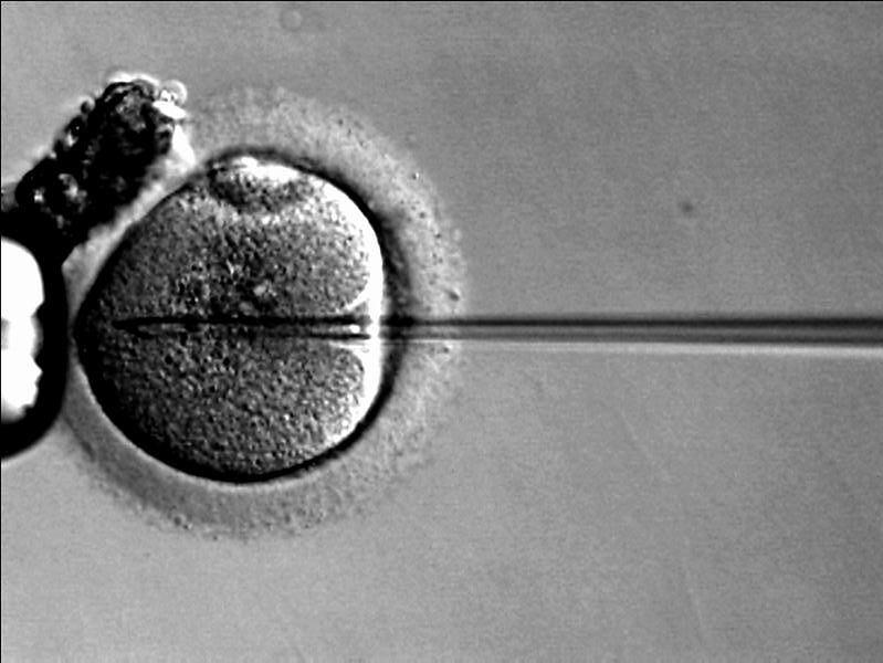 Wprowadzenie plemnika do komórki jajowej