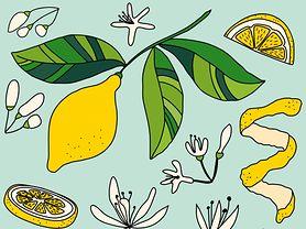 Poznaj naturalne metody zwalczające przeziębienie i grypę