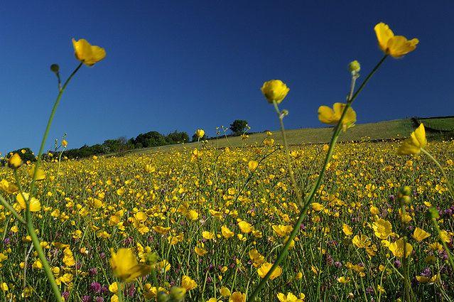 Przyczyna alergii na pyłki