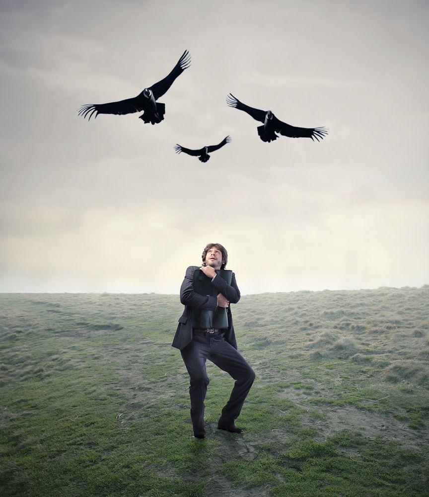 Awizofobia – strach przed kontaktem z ptakami