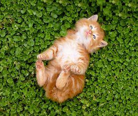 Pokonasz senność dzięki... filmikom z kotami