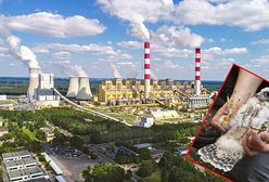 Elektrownia Bełchatów z nietypową hodowlą. Zapewni dom rodzinie wędrownych sokołów