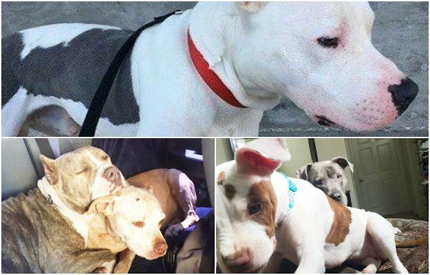 W Montrealu zostanie zabite tysiące psów z powodu nowego prawa