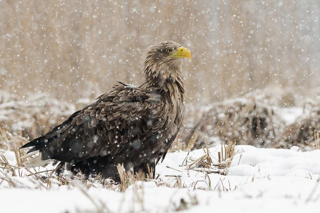 Zimowy spacer w przyrodę. Kiedy zimą chcesz pobyć bliżej natury