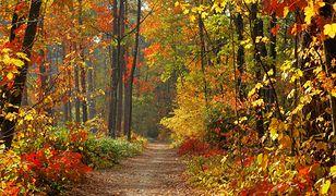 Pierwszy dzień jesieni. Kiedy kończy się kalendarzowe i astronomiczne lato?