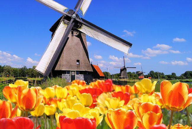 Kwiatowy raj w kraju tulipanów