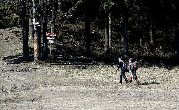 Przewodnicy PTTK odnowią 102 kilometry tras w Beskidzie Sądeckim