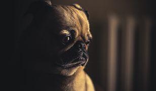 Rośnie podatek od psa. Sprawdź, ile zapłacisz